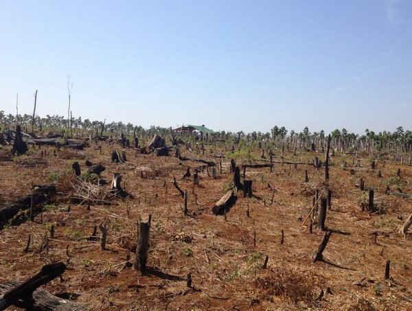Hình ảnh: Đắk Nông: Hàng loạt cán bộ kiểm lâm địa bàn bị đề nghị kiểm điểm trách nhiệm số 1