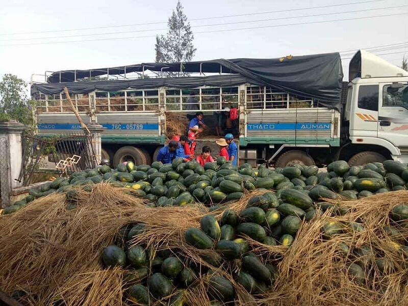 Hình ảnh: Đề nghị tháo gỡ khó khăn trong vận chuyển vật tư nông nghiệp phục vụ sản xuất và chế biến nông sản số 2